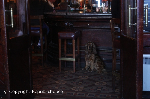 Dog by bar